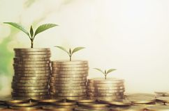 Plant growing step of money stack. With sunshine Royalty Free Stock Image