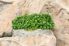 Plant growing in stone Stock Photo