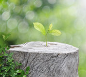 Plant growing on timber on green bokeh background , ecology conc. Plant growing on timber on green bokeh background stock image