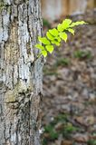 Plant growing on tree Royalty Free Stock Photos
