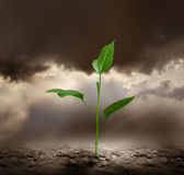 Plant growing trough dead ground. Seedling growing on cracked, dry earth Stock Images