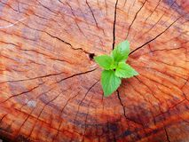 Plant growing through of trunk of tree stump royalty free stock photos