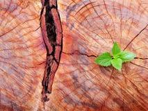 Plant growing through of trunk of tree stump stock photo