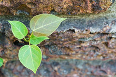 Plant growing through on wall. Plant growing through crack on wall Stock Photo