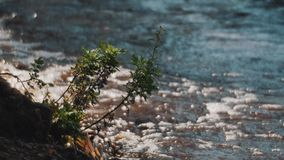 Plant growing on a water shore swinging in wind in front of big waves stock video footage