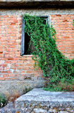 Plant growing through window Royalty Free Stock Images