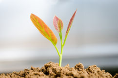 Plant growing Stock Image
