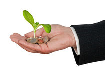 Plant  growng from pile of coins Stock Image