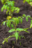 Plant grows in the garden Stock Image