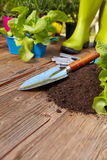 Plant grows from the ground with garden tools Royalty Free Stock Image