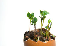 The plant grows from the ground on a white background Royalty Free Stock Photos