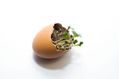 The plant grows from the ground on a white background Stock Image