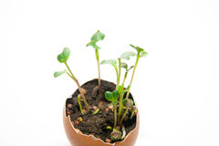 The plant grows from the ground on a white background Stock Photos