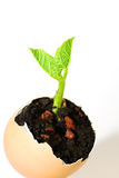 The plant grows from the ground on a white background Royalty Free Stock Images