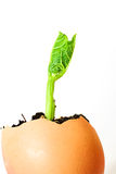 The plant grows from the ground on a white background Stock Photo