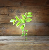 Plant grows in old wood crack and symbolizes renewal and freshness. royalty free stock image