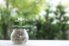 The plant grows out of coins.  Stock Image