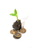 The plant grows from a pile of soil and coins on a white backgro Royalty Free Stock Image