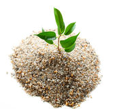 Plant grows from sand Stock Image