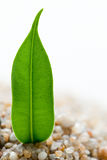 Plant grows from sand Royalty Free Stock Image