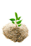 Plant grows from sand Royalty Free Stock Photos