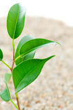 Plant grows from sand Royalty Free Stock Photo