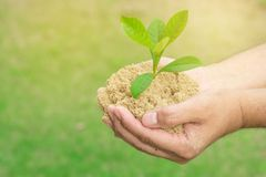 Plant grows on soil and hands of men. Plant grows on soil and hands of men Royalty Free Stock Photography