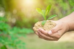 Plant grows on soil and hands of men. Plant grows on soil and hands of men Royalty Free Stock Photos