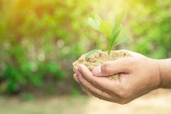 Plant grows on soil and hands of men. Plant grows on soil and hands of men Stock Photos
