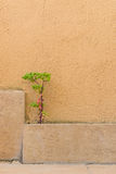 Plant grows between a tile and wall Royalty Free Stock Photos