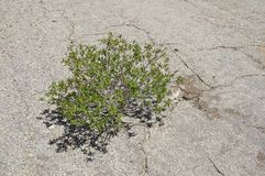 Plant Grows Through Crack Royalty Free Stock Photography
