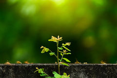 Plant grows on wall  and symbolizes struggle and restar.t. Plant grows on wall  and symbolizes struggle and restart Stock Image