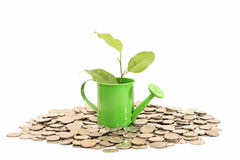 Plant grows from watering can with coins Royalty Free Stock Image