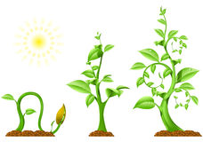 Plant Growth royalty free illustration