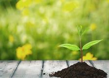 Plant Growth Stock Image