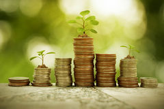 Plant growth on coin pile, business concept. Ual Royalty Free Stock Photos