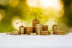 Plant growth on coin pile Royalty Free Stock Photography