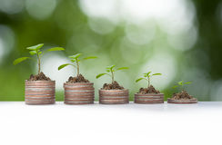 Plant growth on coin pile Stock Photography