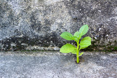 Plant growth on concreat with moss Royalty Free Stock Images