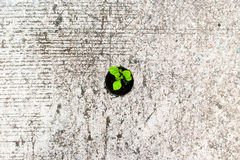 Plant growth on the concrete hole Royalty Free Stock Image