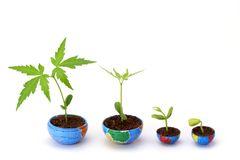 Plant growth Stock Photos