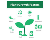 Plant growth factor infographic in monochrome Royalty Free Stock Photography