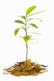 Plant growth between gold coins Stock Images