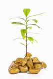 Plant growth between gold rocks Stock Photos