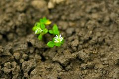 Plant growth Royalty Free Stock Images