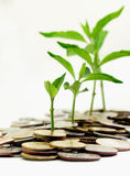 Plant growth on the money Stock Photos