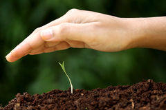 Plant growth-New beginnings. Plant growth against green-New beginnings Royalty Free Stock Photos