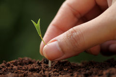 Plant growth-New beginnings. Against green stock photos
