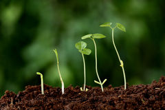 Plant growth-New beginnings. Against green stock images