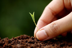 Plant growth-New beginnings. Hand holding small baby plant growth-New beginnings Royalty Free Stock Photo